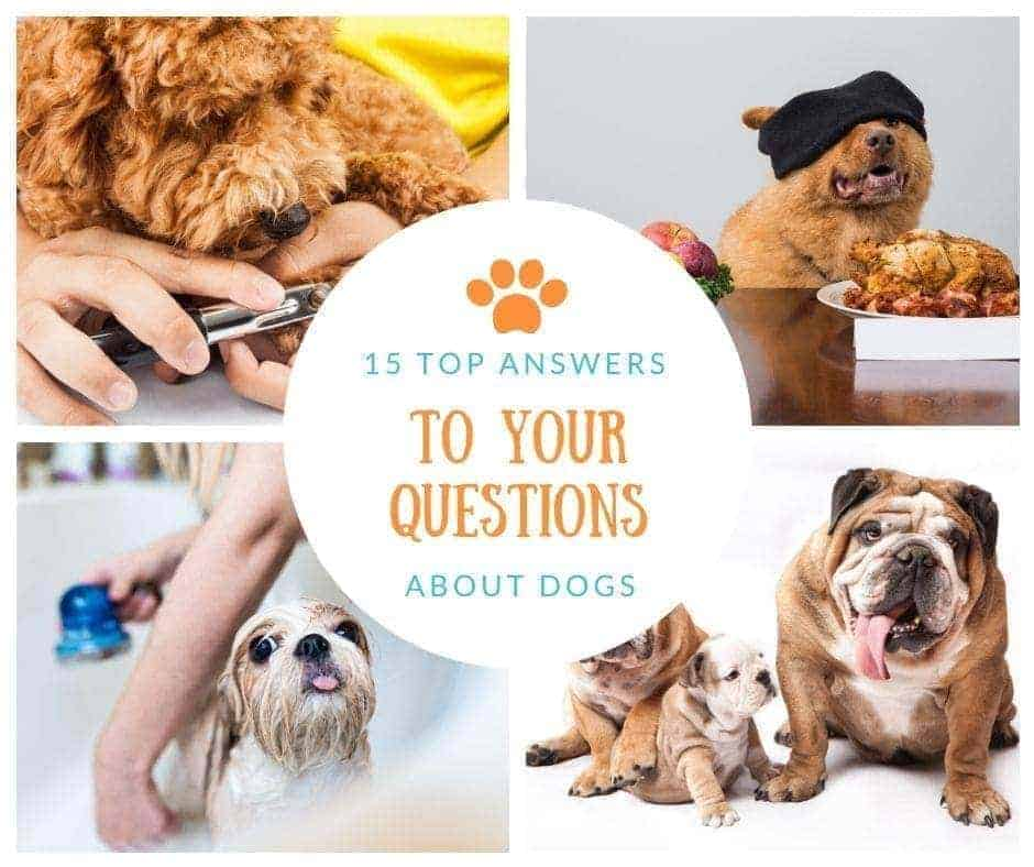 15 answers to questions about dogs