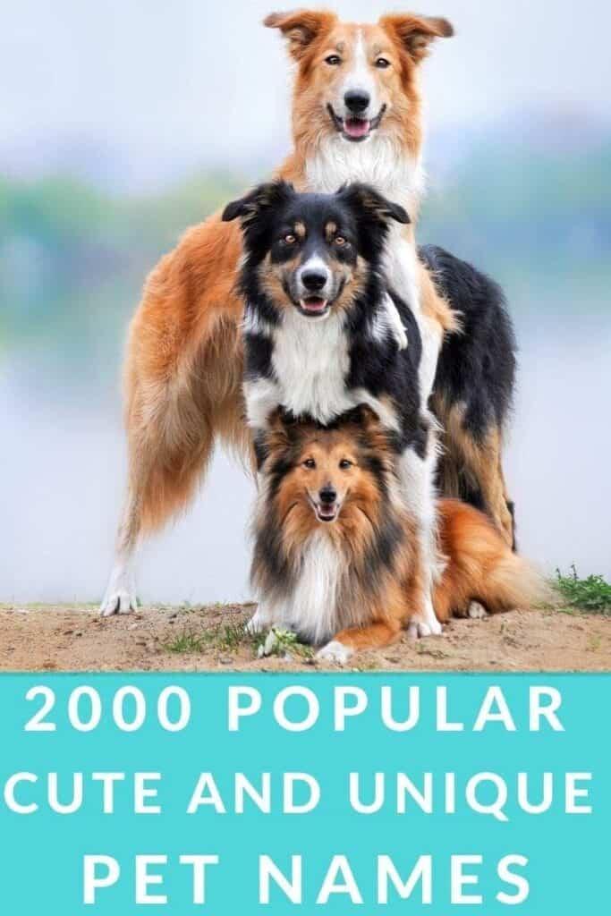2000 Popular pet names