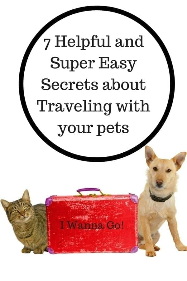 traveling with pets, pet travel