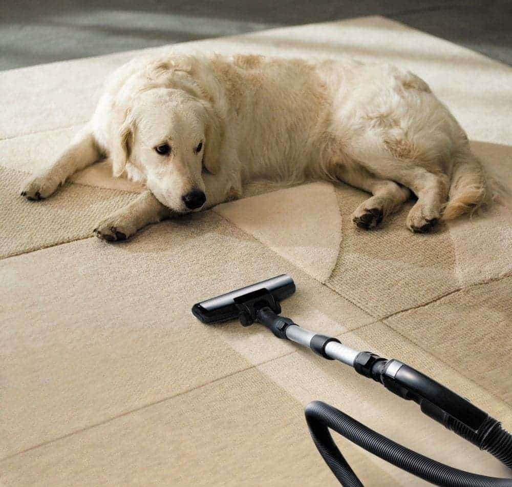 How To Safely And Easily Clean Up Dog Pee On Carpets