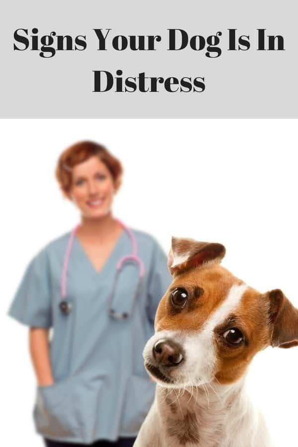 Dogs, #dogs, @dogs, dog health, #dog health, @dog health, healthy dog, #healthy dog, @healthy dog, dog names, #dog names, @dog names, choosing a veterinarian, #choosing a veterinarian, @choosing a veterinarian, dog doctors, #dog doctors, @dog doctors,