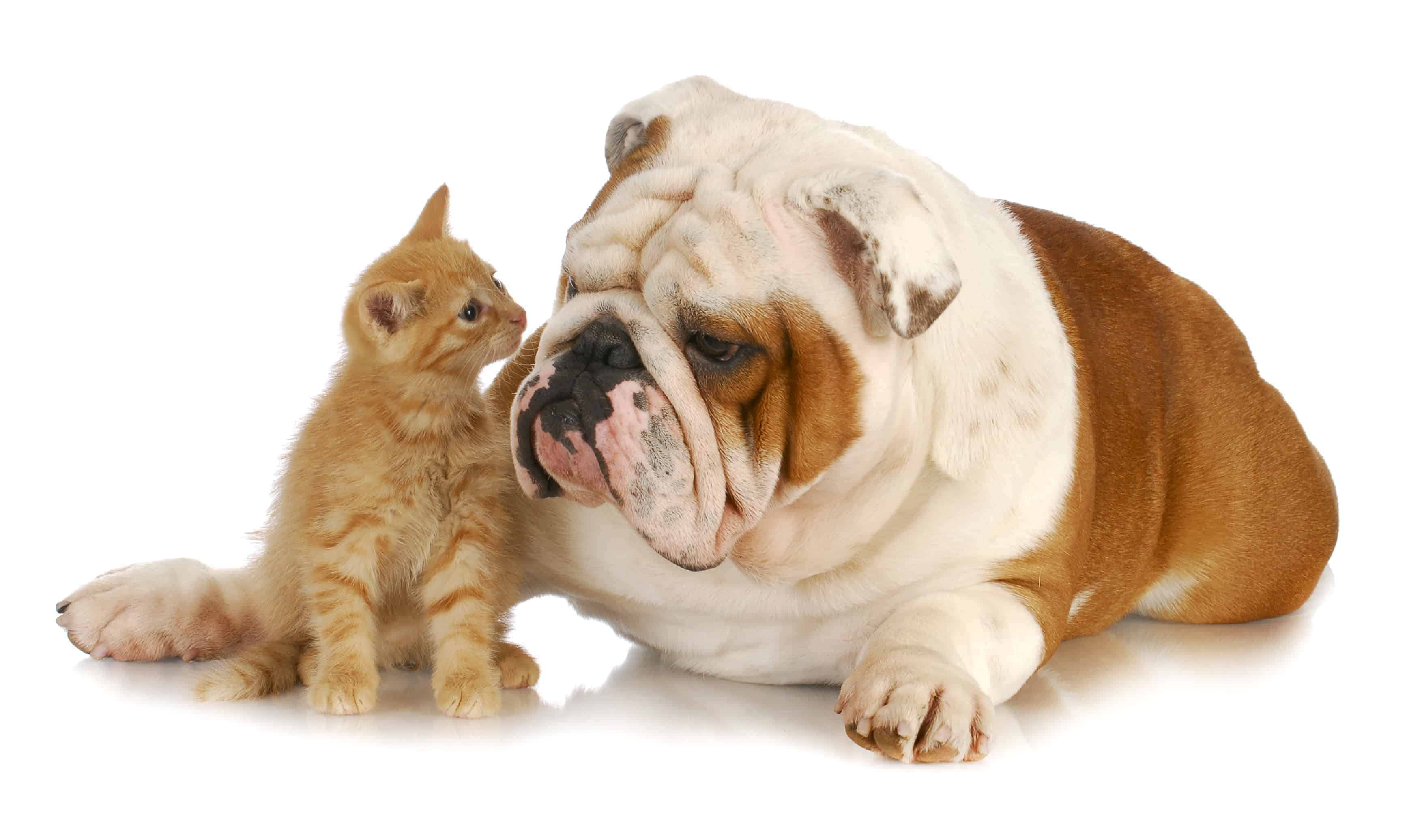 Dog and Cat Facts