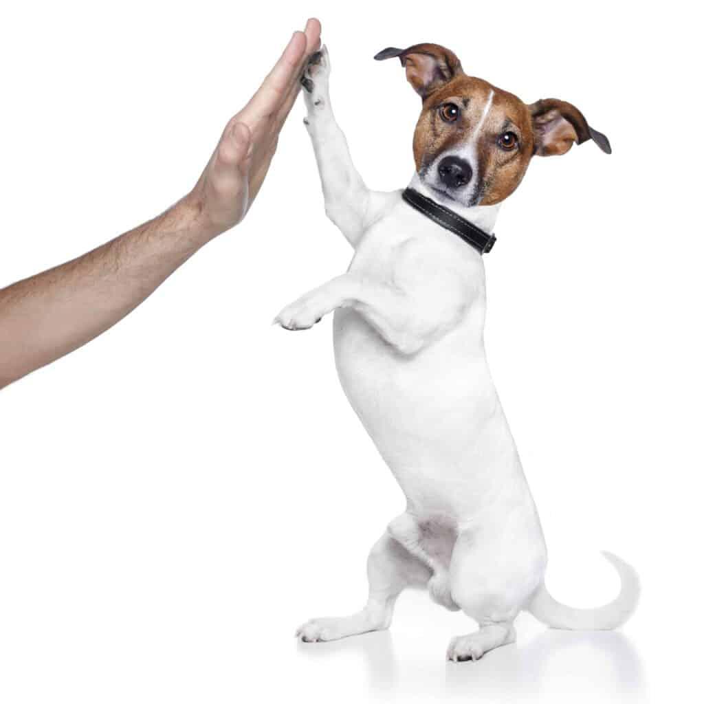 dog high five, #dog, #dog high five