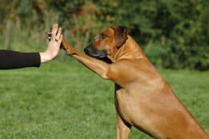Dog training giving paw