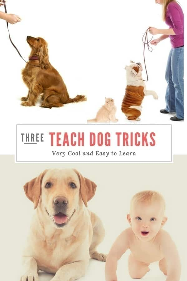 3 Tricks to Teach your dog