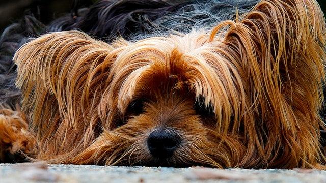 2000 Cute and Popular Pet Names