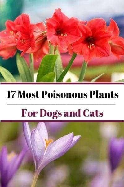17 Poisonous plants