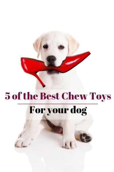 5 best chew toys