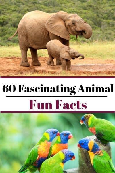 60 animal fun facts