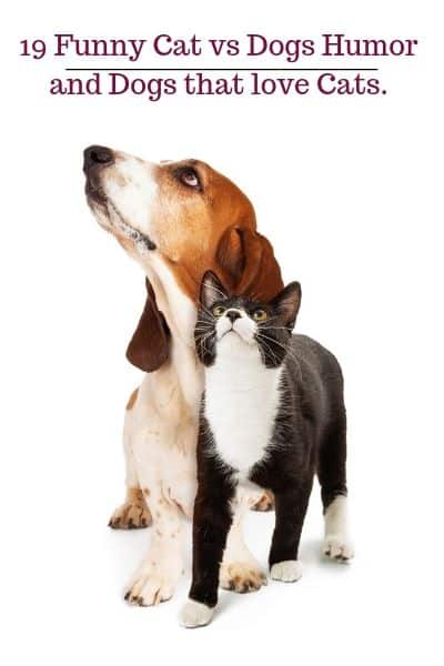 Dog humor and cats