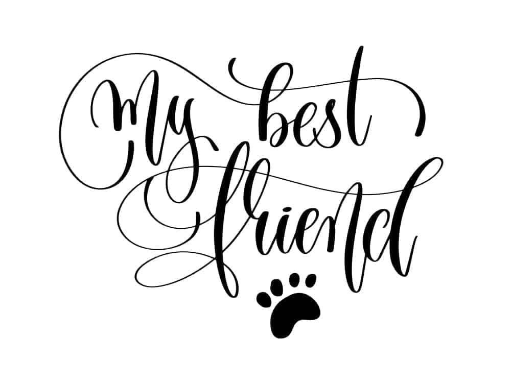 My Best Friend Quote