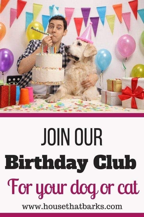 Dogs Birthday Club