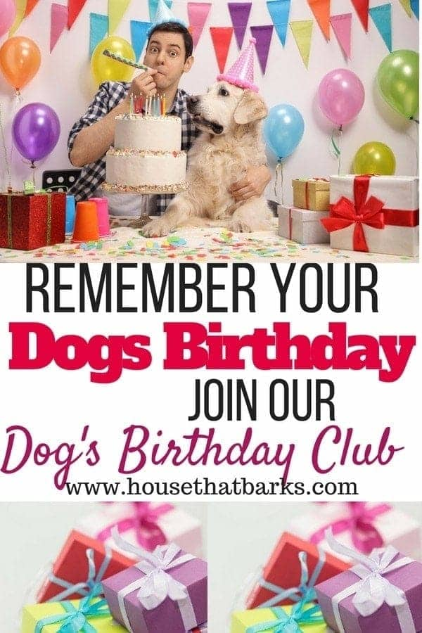 Dogs birthday parties