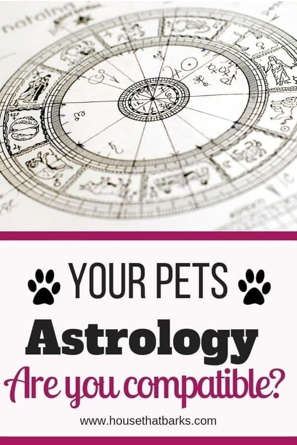 12 Easy Astrology Zodiac Signs to check your dogs