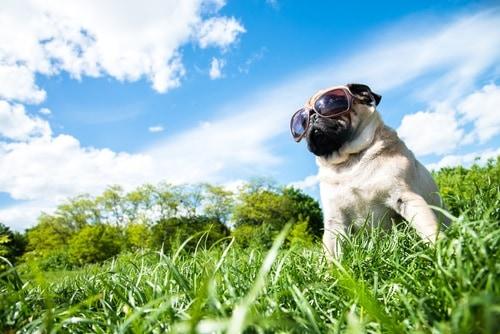 Zodiac for Dogs