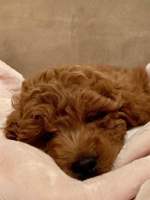 Ruby's blanket