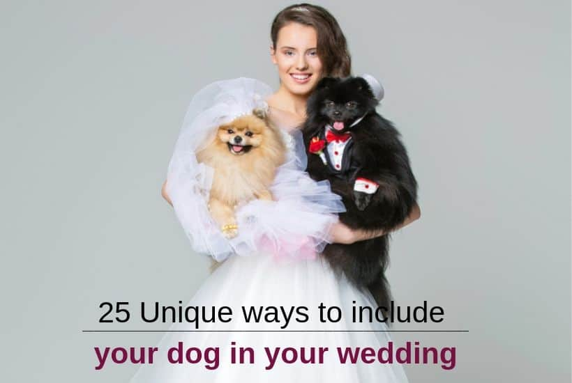 ways to include dogs in weddings