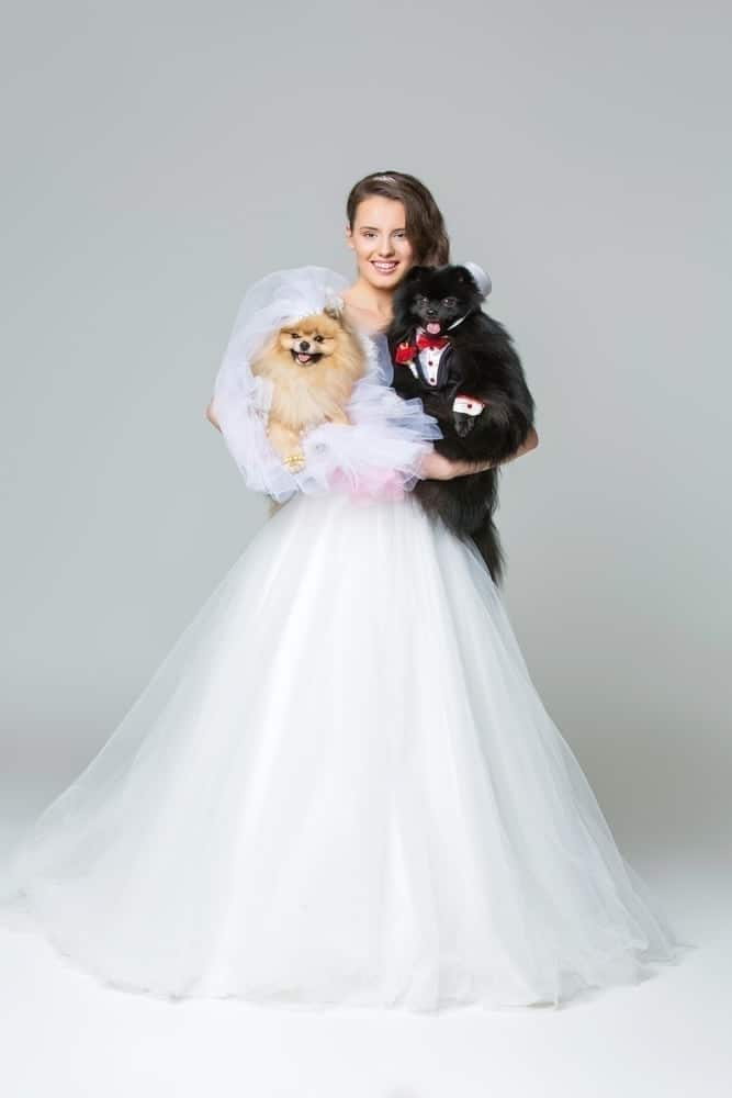 dog wedding attire