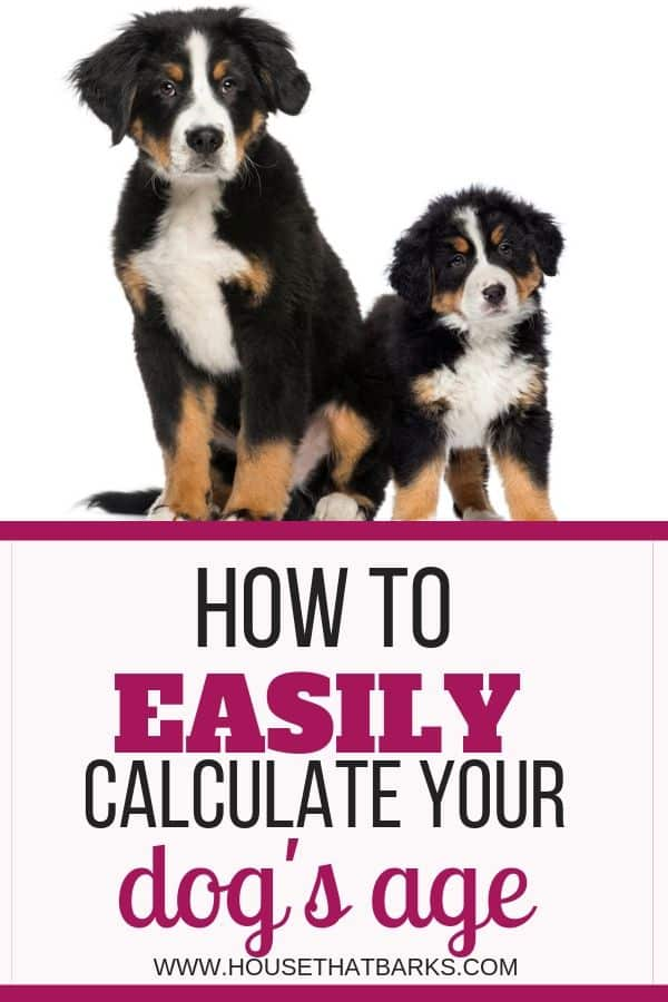 dogs age calculator