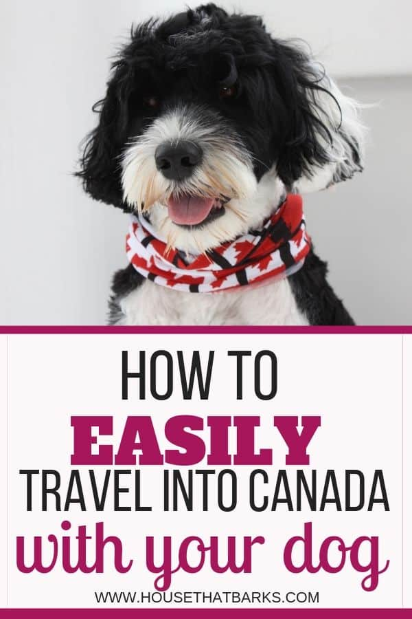 traveling dogs into Canada