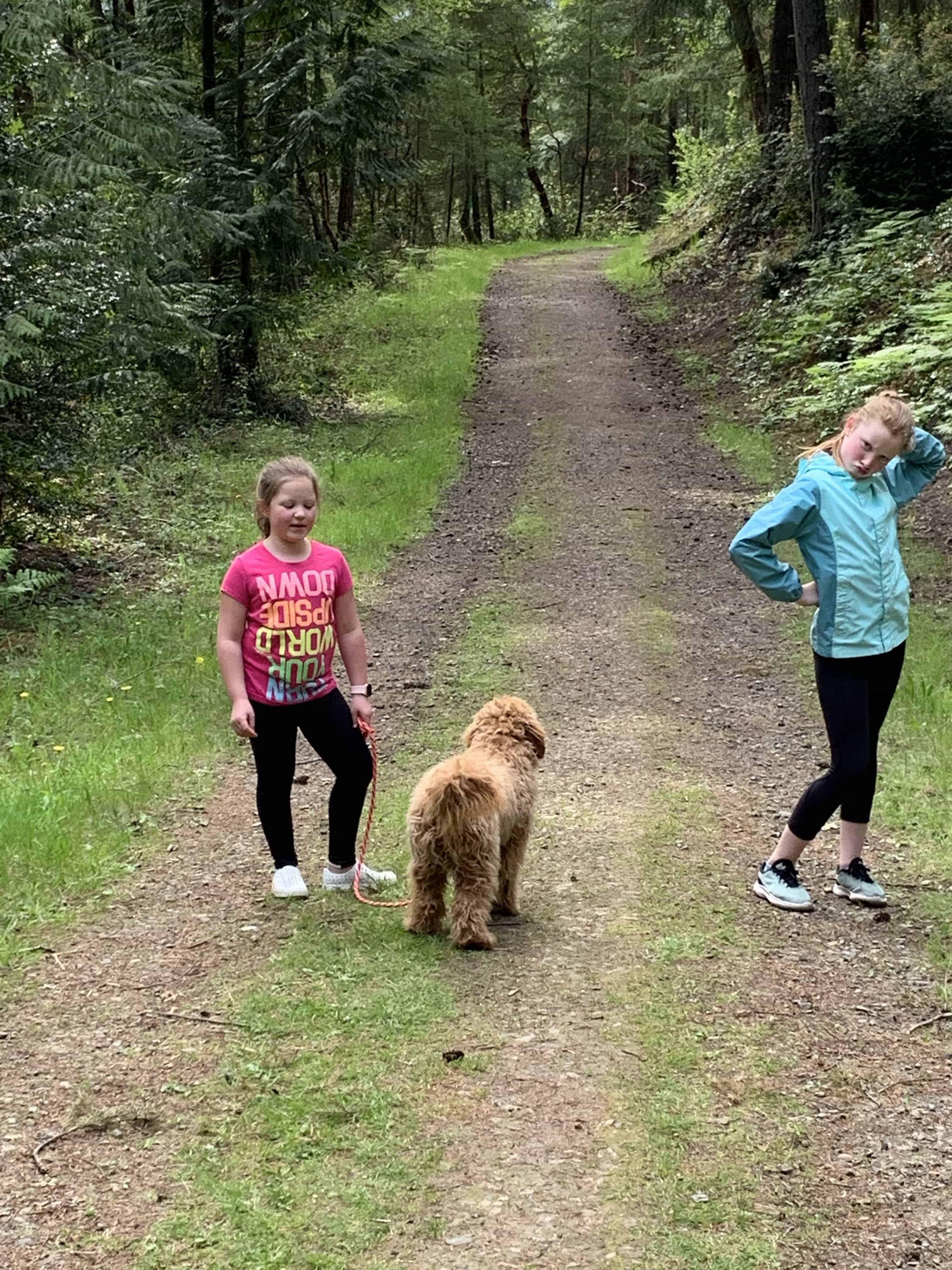 dog leash goldendoodle