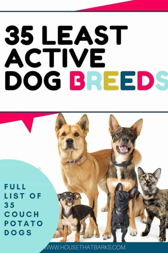 35 least active dogs