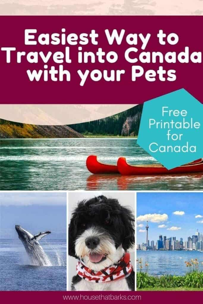 Traveling into Canada with Dogs