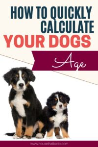 Dogs Age Into Human Year