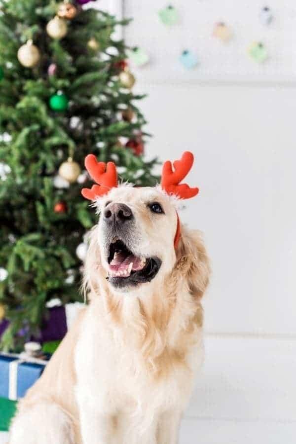 Dog Christmas Tree Safety