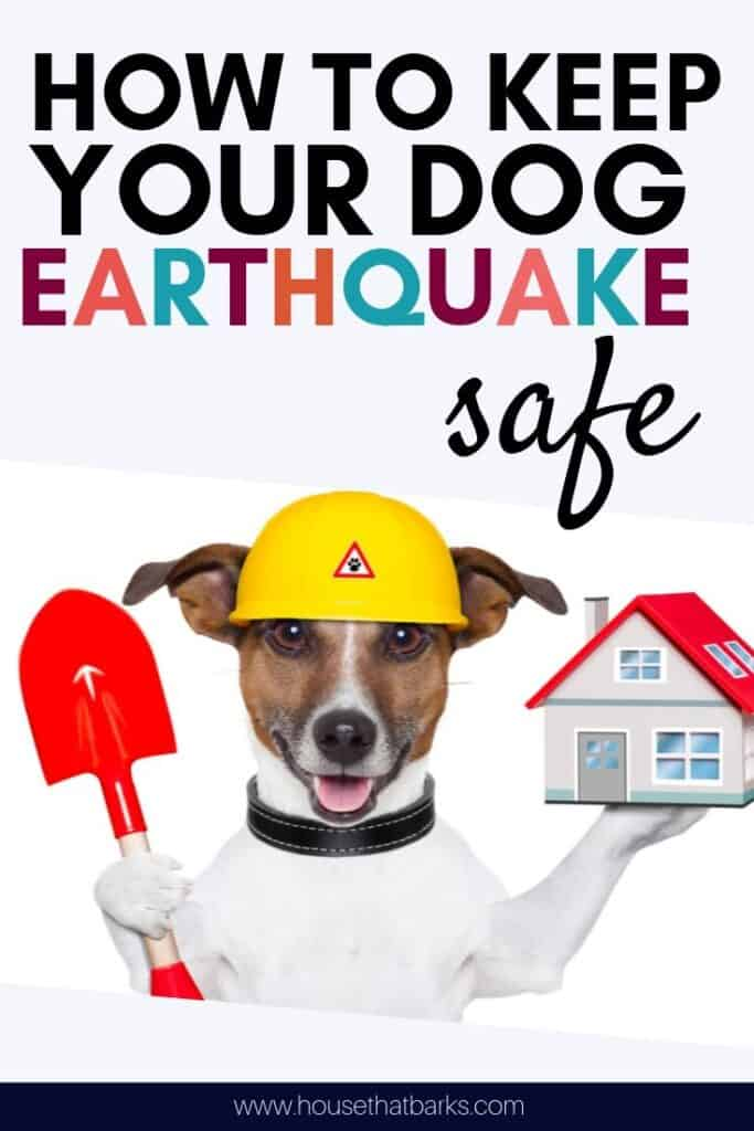 protect dog from earthquake