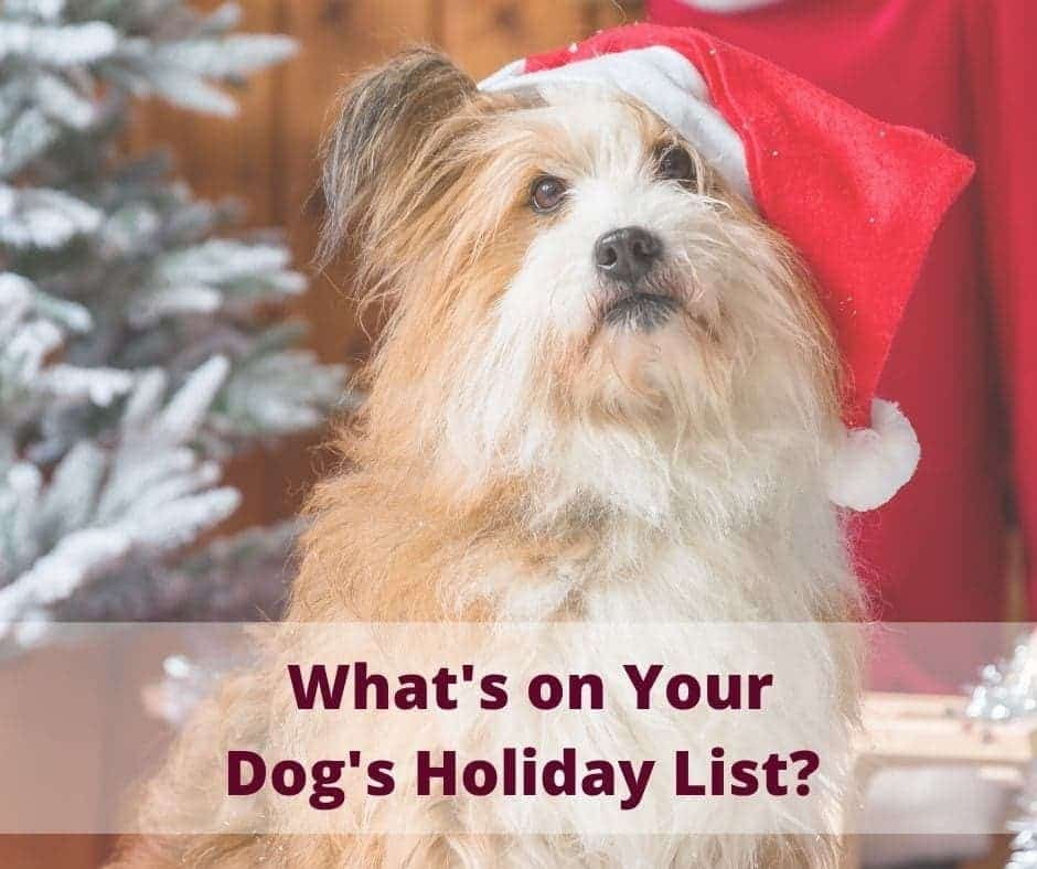 What's on your dogs holiday list