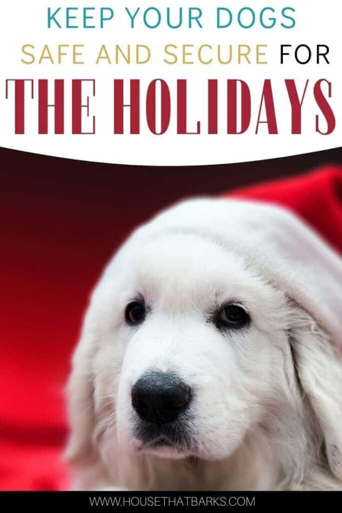 Keeping dogs safe during the holidays