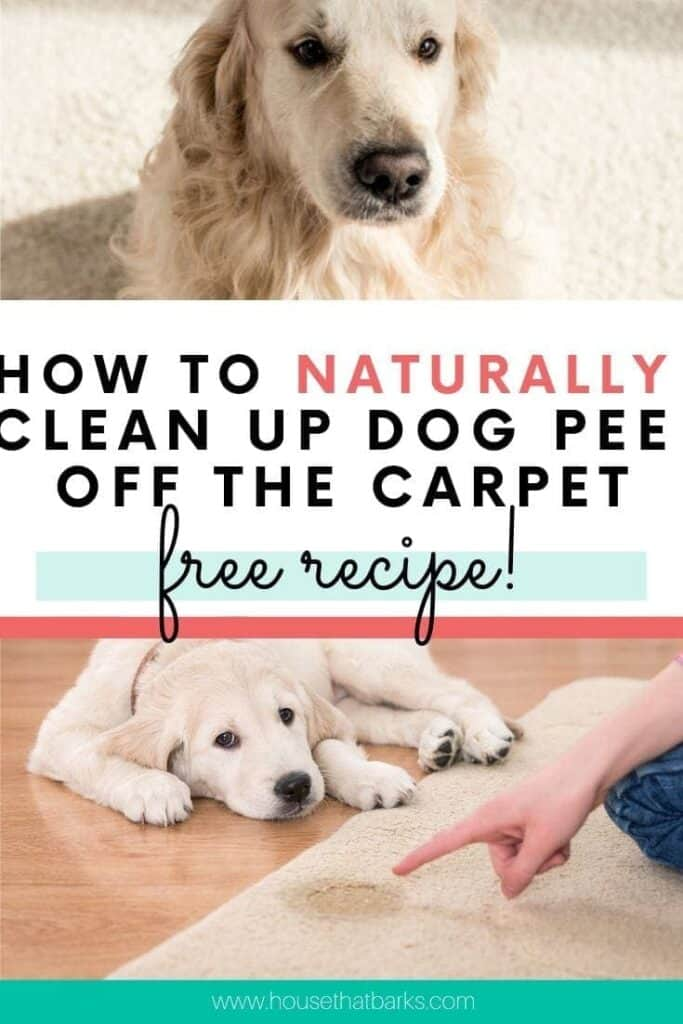 Naturally Clean up Dog Pee