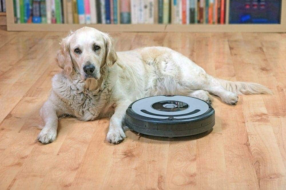 keeping a house clean with a dog