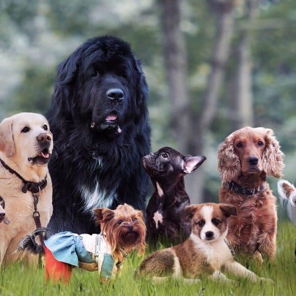 least active dog breeds