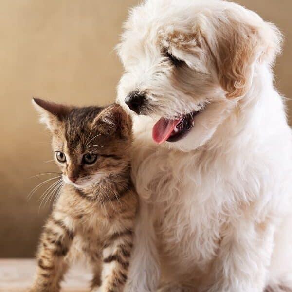 dog cat humor