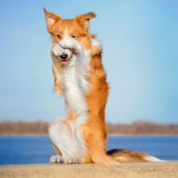 teach dog tricks
