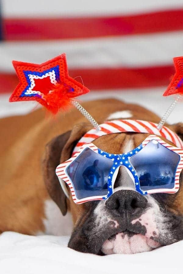 dogs 4th of July safety