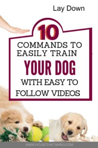 Easily train your dog